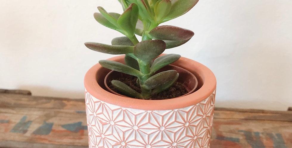 Succulent In Decorative Terracotta Pot