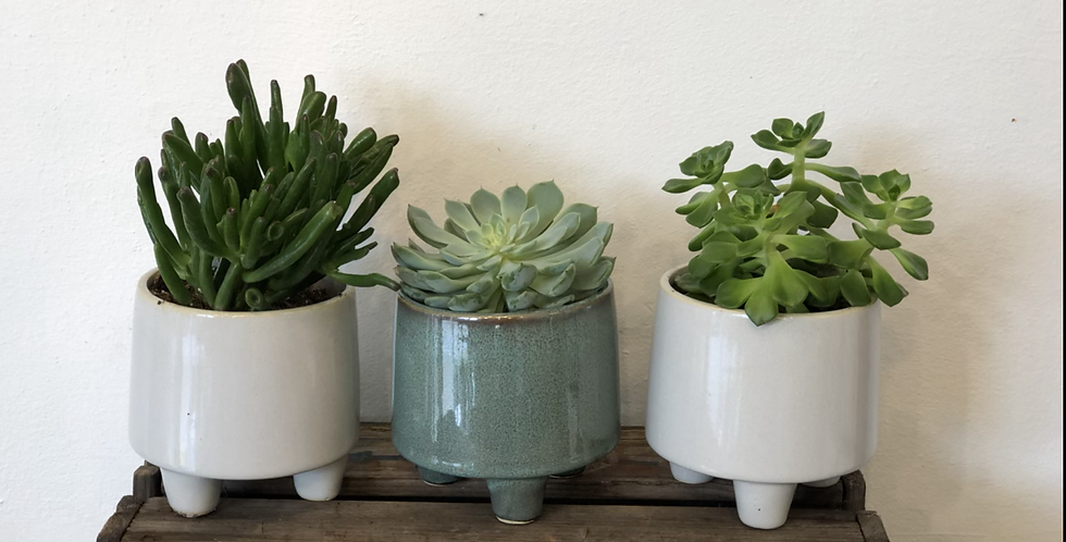 Trio of Succulents