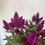Thumbnail: Celosia Plant In Terracotta