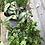 Thumbnail: Indoor Plant Trio