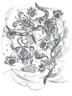 tiger_6 (2)