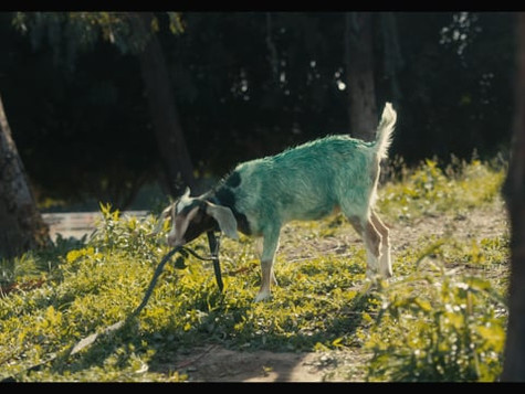 Bruxo Mezcal -The Goat
