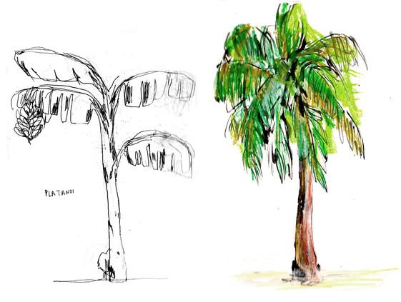 cuba palmier.jpg
