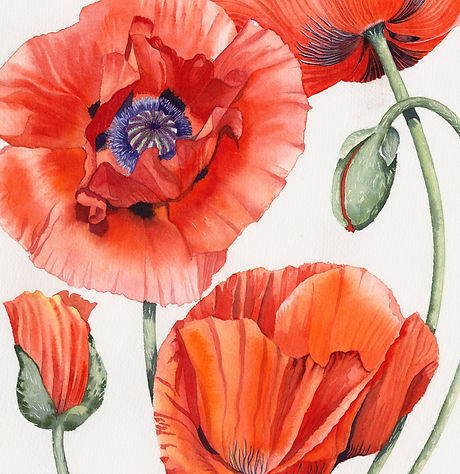Red%20poppies%20sq%20small%20file_edited