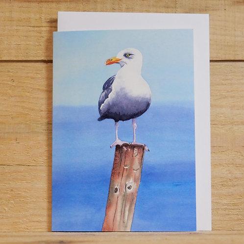 Seagull. Gift card