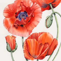 Red poppies sq small file.jpg