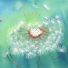 Dandelion watercolour