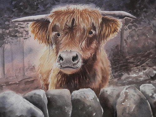 """Hamish' Highland Cow Original Watercolour Painting"