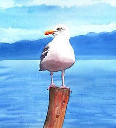seagull watercolour