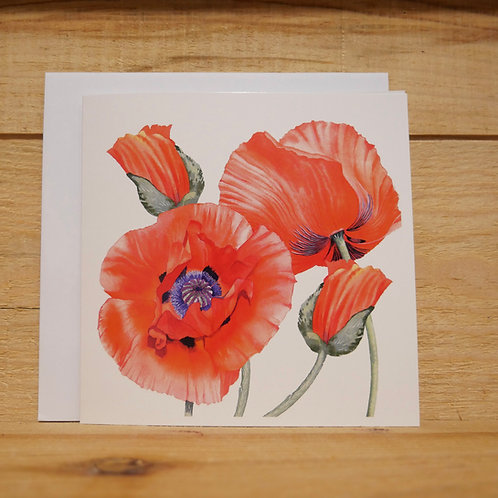 Red poppies. Printed card