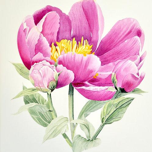 Camila. Original Watercolour Painting.