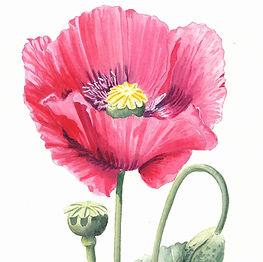 Poppy painting watercolour workshop