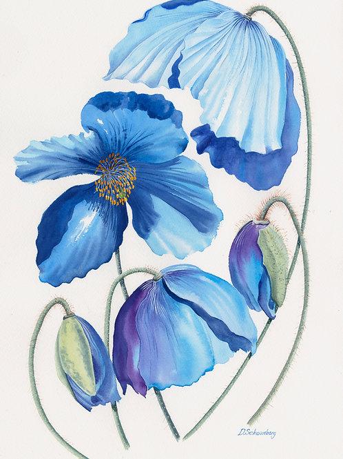 Ltd edition print of an original watercolour of blue poppies
