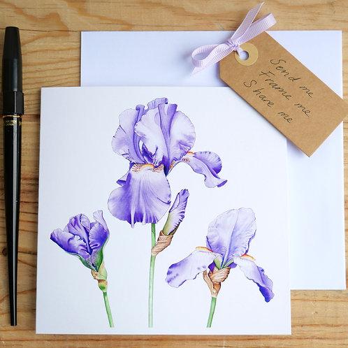 Trio of Irises. Gift card