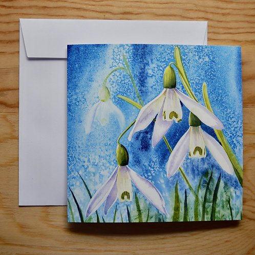 Snowdrops. Gift card