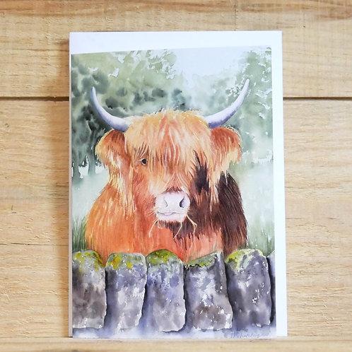 Highland cow 'Boris' 2. Gift card