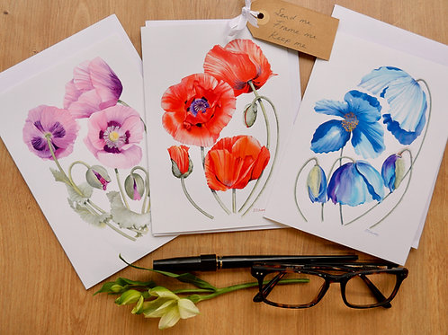 Poppy Variety Collection of 6 Cards. For any occasion