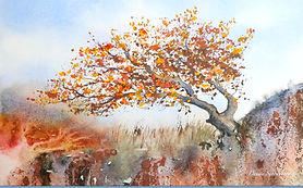 Autumn%20Colours%20Windswept%20tree%20on