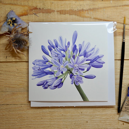 Agapanthus Printed Cards 145mm square with envelope a