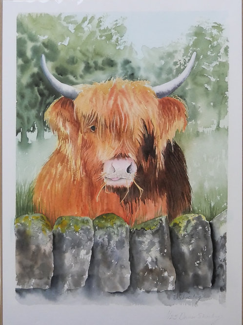 "Ltd edition print of an original watercolour of'Boris"" highland cow"