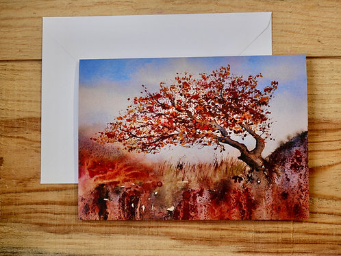 Windswept tree on Mull. Gift card