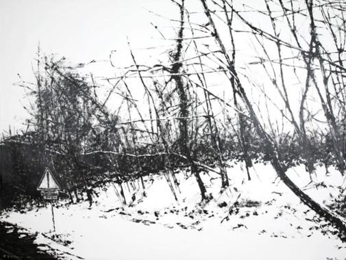 arbresbandesrugueuses1.jpg