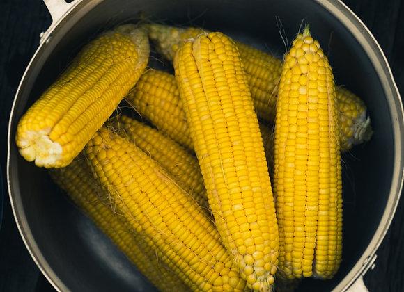 Corn Cobbettes 15pcs