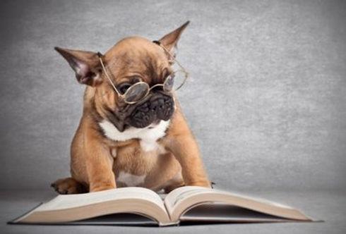 learningdog.jpg