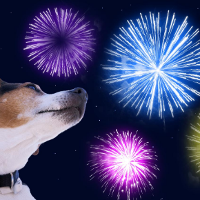 Prepare your pet in time for fireworks night with advice from our head vet Catherine Corden-Parry.
