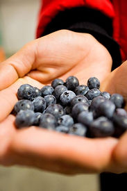 Refrigeration & Perishable  Goods