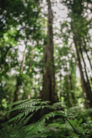 The Rainforest, Queensland