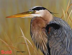 Artist Richard Clifton