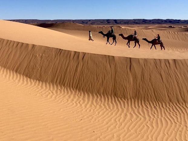 Öken tre kameler.jpg