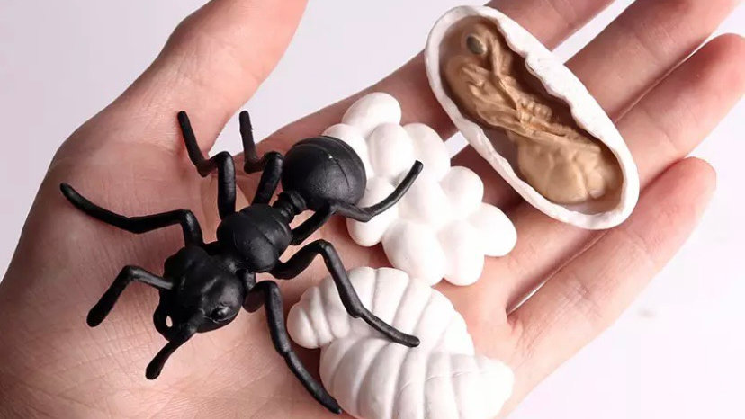 Ant lifecycle model pack