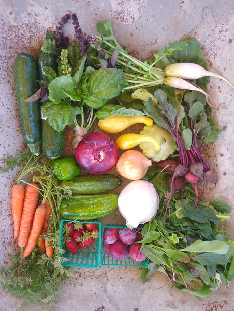 From the Garden this Week, June 17, 2021