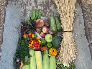 From the Garden this Week, September 9, 2021...