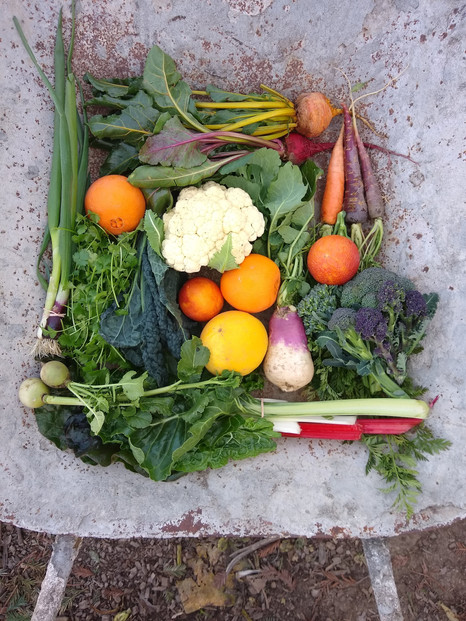 From the garden this week, February 25, 2021...