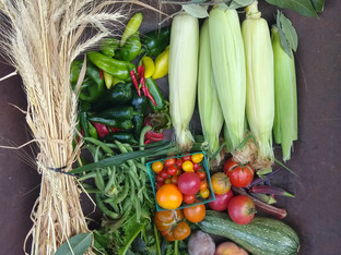 From the Garden this Week, September 16, 2021...