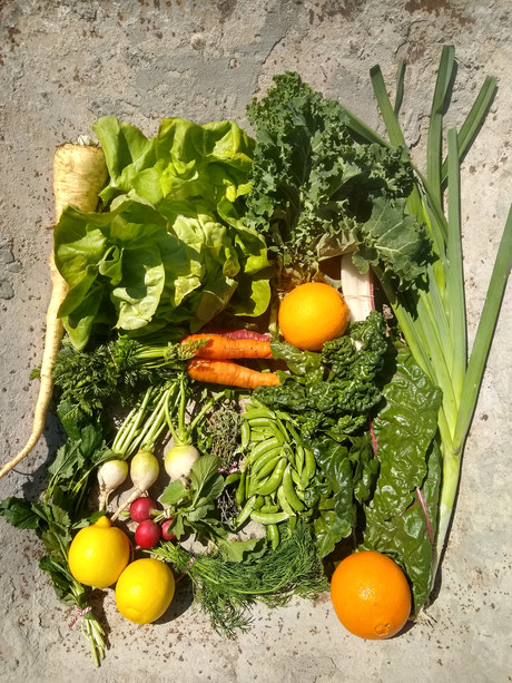 From the Garden this Week, April 8, 2021...