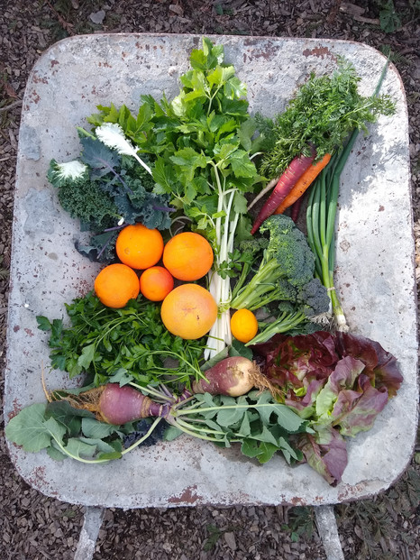 From the garden this week, February 18, 2021