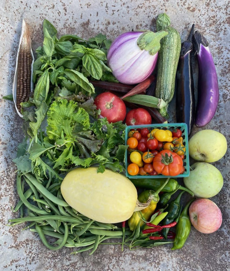 From the Garden this Week, September 30, 2021...