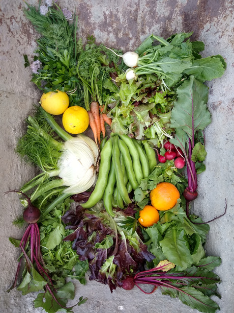 From the Garden this Week, April 22, 2021...