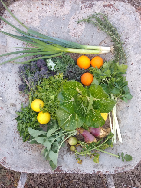 From the garden this week, March 4, 2021...