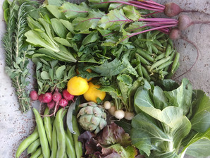 From the Garden this Week, April 29, 2021...