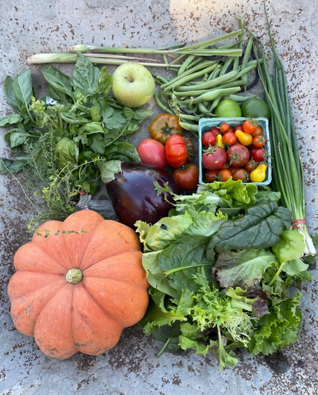 From the Garden this Week, October 14, 2021...