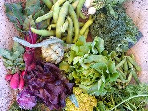 From the Garden this Week, May 6, 2021...