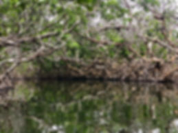 Everglades kayak tour