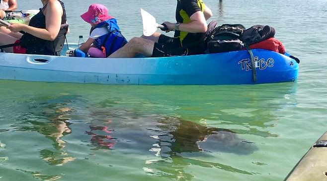 Naples kayak tours