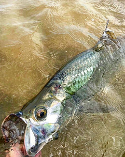 Eveglades fly fishing for tarpon