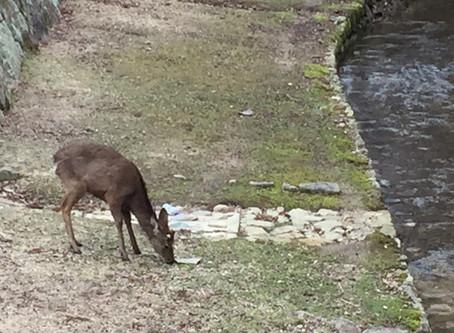 鹿のひとりごと